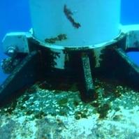 Solda Molhada Offshore Concluída - Serviços de Mergulho Belov